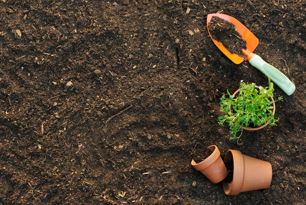 Cát san lấp có trồng cây được không?